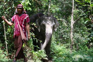 karen mahout