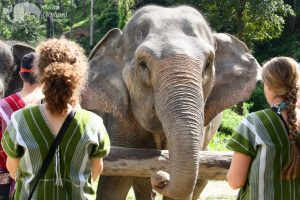 feeding elephants at karen elephant oasis