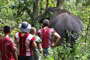 walking with elephants in the jungle