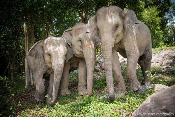 Samui_Elephant_Haven