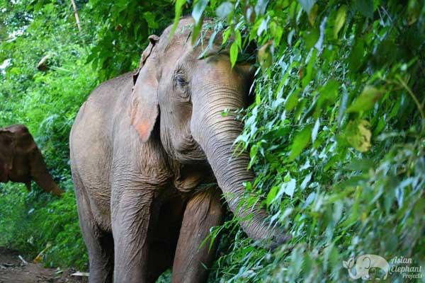 Elephant_Delight_1
