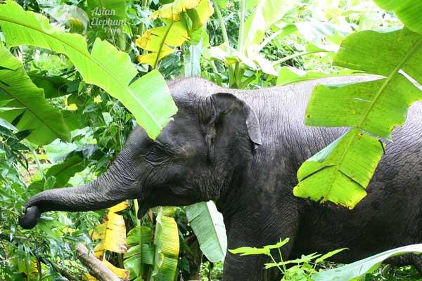 Elephant_Heaven_1