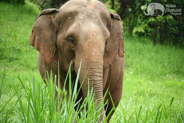 Elephant_Highlands_1