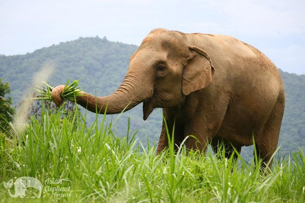 Elephant_Highlands_2