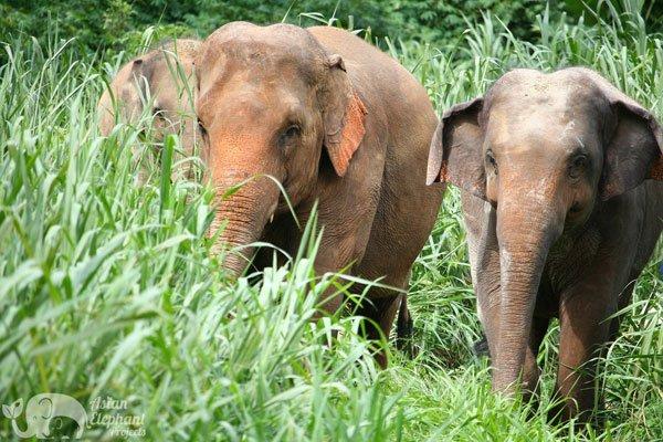 Elephant_Refuge_Project