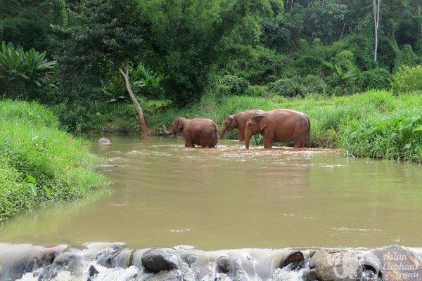 Elephant_Refuge_Project_4