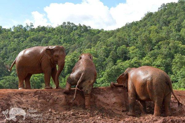 Elephant_Refuge_Project_5