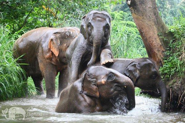 Elephant_Trails_1