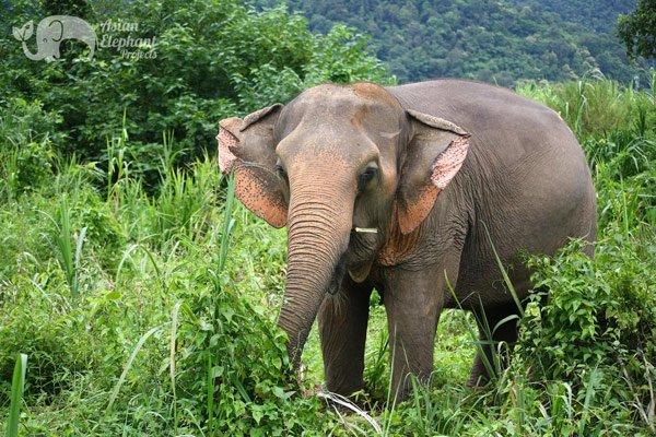 Elephant_Wellness_1