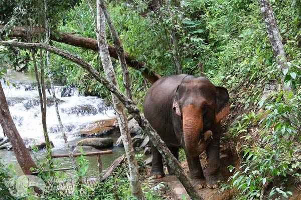 Karen_Elephant_Experience_1