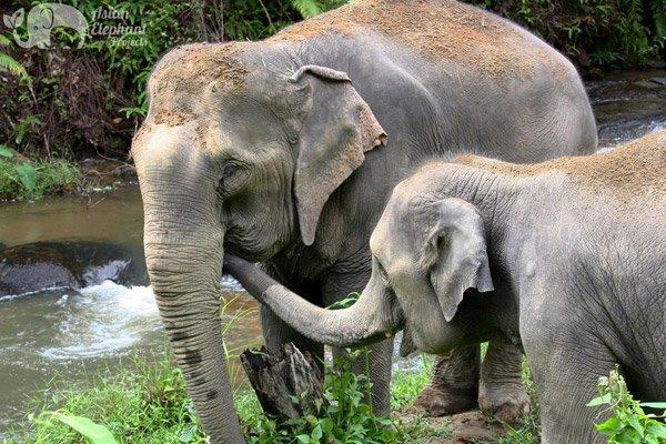 Karen_Elephant_Habitat_1