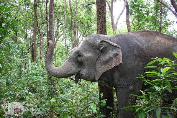 Karen_Elephant_Habitat_2