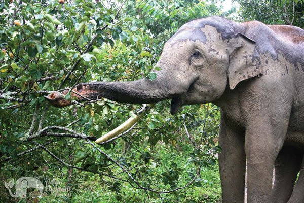 Karen_Elephant_Home_1