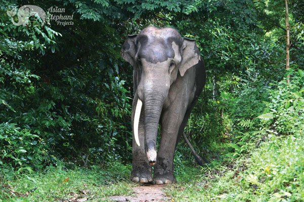 Karen_Elephant_Home_4