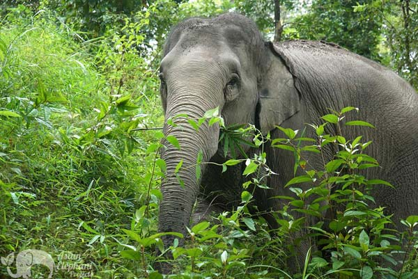 Karen_Elephant_Project_09