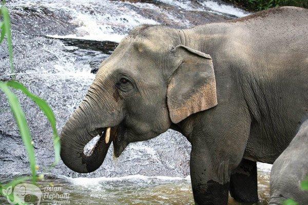 Karen_Elephant_Retirement_2