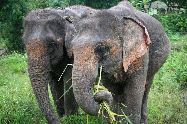 Karen_Elephant_Retreat_1