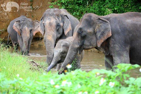 Karen_Elephant_Retreat_2