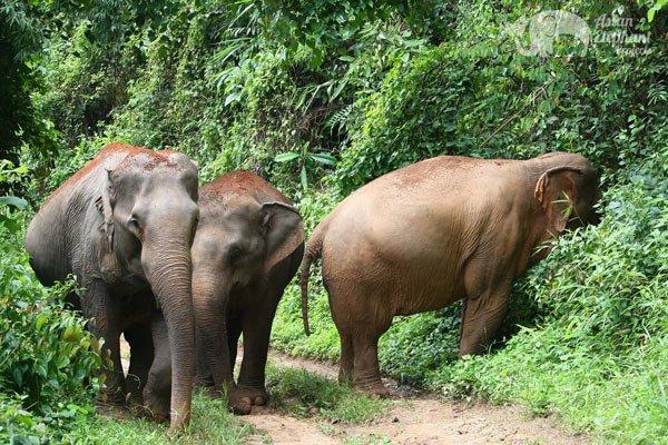 Majestic_Elephant_Project_2