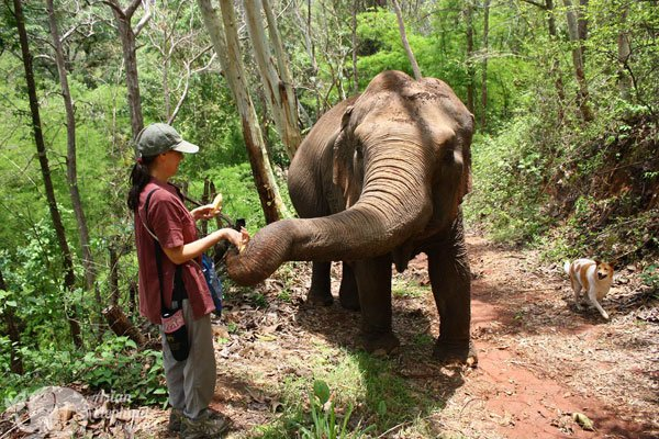 Sunshine_For_Elephants_7