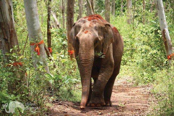 Sunshine_for_Elephants_3
