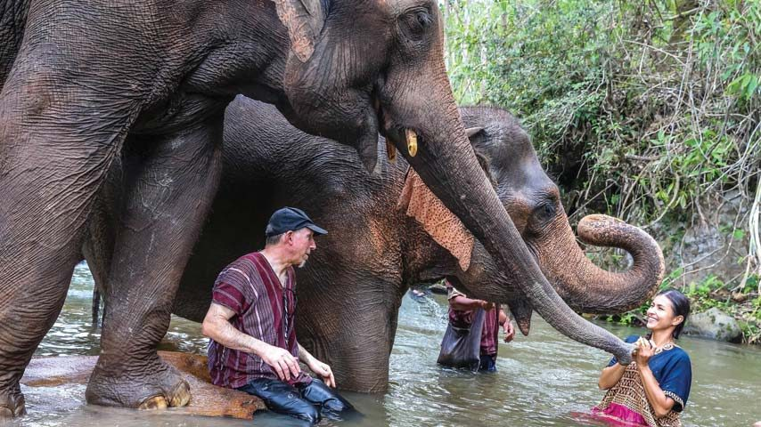 Spending time with elephants in the jungle stream Northern Thailand