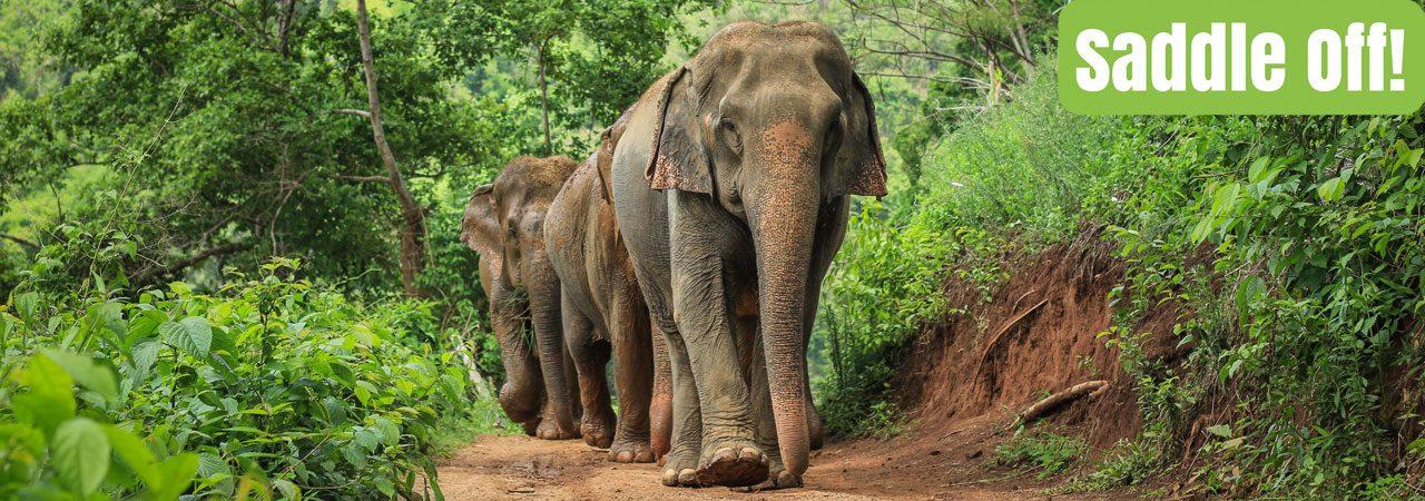 Asian Elephant Projects Saddle Off