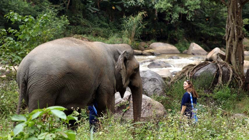 Observing the wonder of elephants in nature